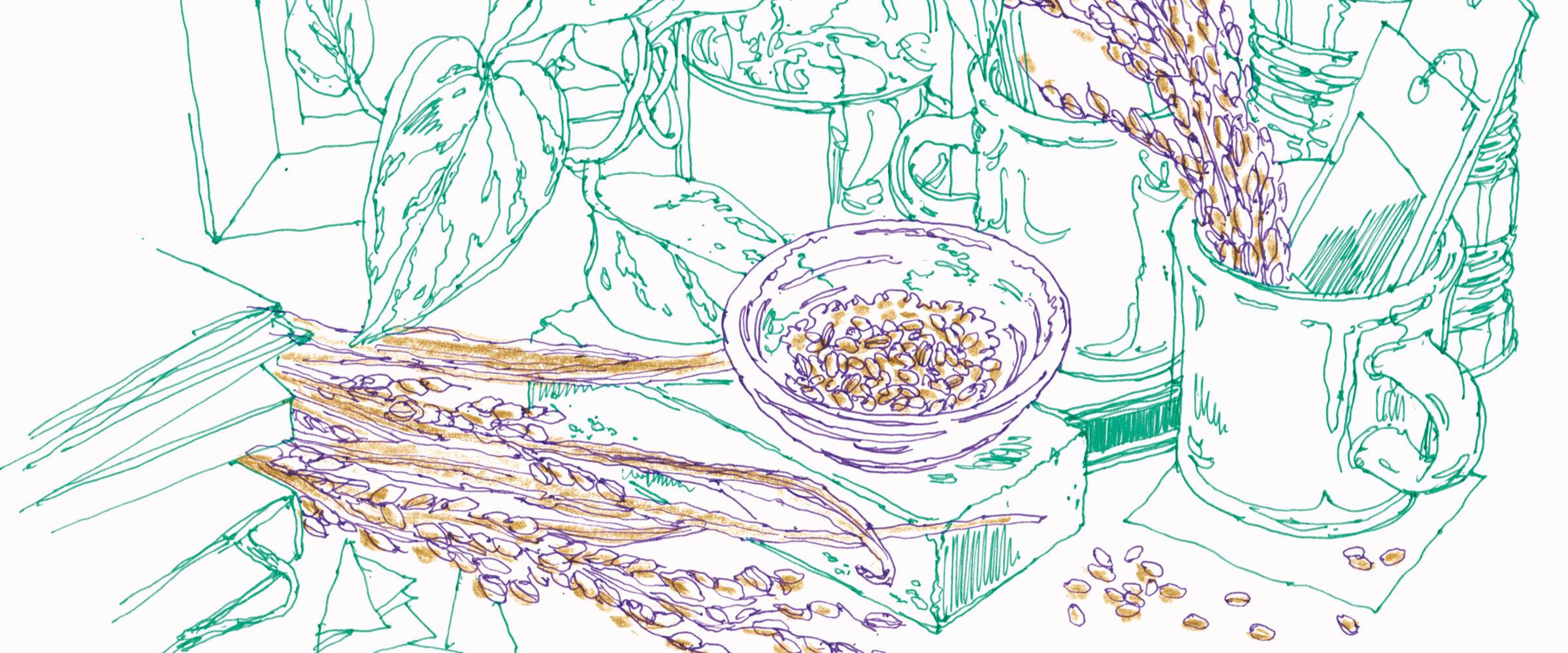 キレイを引き出す素材のはなし|米・玄米